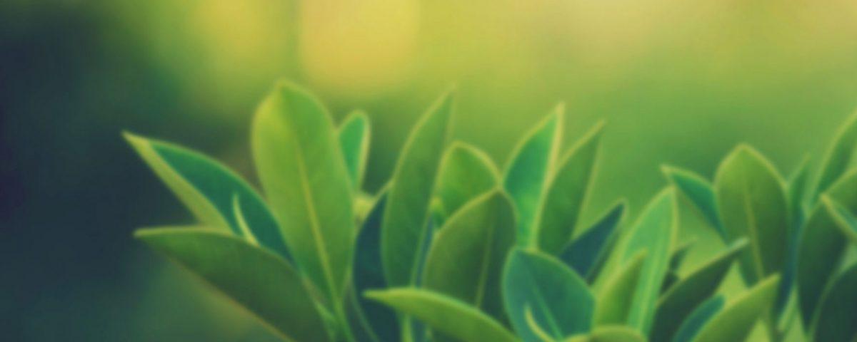 nöropatiye-karşı-faydalı-bitkiler