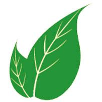 nöropatiye-karşı-iyi-gelen-bitkiler-nelerdir